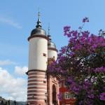Heidelberg41
