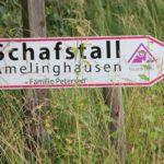 2016-06-29_106 Grillen Amelinghausen
