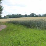 2016-06-29_109 Grillen Amelinghausen