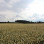 2016-06-29_169 Grillen Amelinghausen