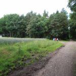 2016-06-29_43 Grillen Amelinghausen