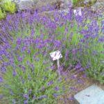 2016-07-05 Bot Garten 11