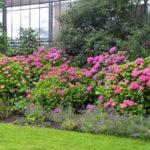 2016-07-05 Bot Garten 12