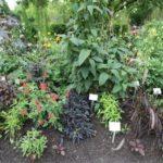 2016-07-05_10 Loki Schmidt Garten