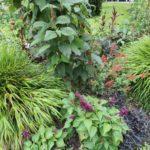 2016-07-05_11 Loki Schmidt Garten