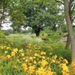 2016-07-05_115 Loki Schmidt Garten