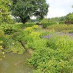2016-07-05_116 Loki Schmidt Garten