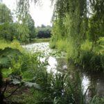 2016-07-05_122 Loki Schmidt Garten