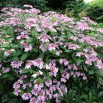 2016-07-05_14 Loki Schmidt Garten