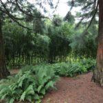 2016-07-05_15 Loki Schmidt Garten