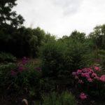 2016-07-05_17 Loki Schmidt Garten