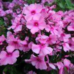 2016-07-05_18 Loki Schmidt Garten