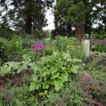 2016-07-05_19 Loki Schmidt Garten