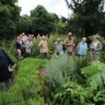 2016-07-05_28 Loki Schmidt Garten