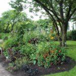 2016-07-05_3 Loki Schmidt Garten