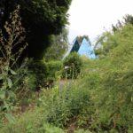 2016-07-05_30 Loki Schmidt Garten