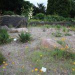 2016-07-05_38 Loki Schmidt Garten