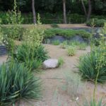 2016-07-05_39 Loki Schmidt Garten