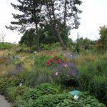 2016-07-05_48 Loki Schmidt Garten
