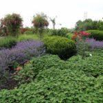 2016-07-05_49 Loki Schmidt Garten