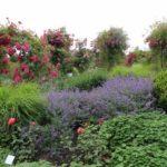 2016-07-05_50 Loki Schmidt Garten