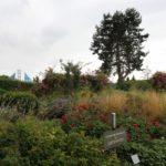 2016-07-05_52 Loki Schmidt Garten