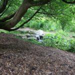 2016-07-05_65 Loki Schmidt Garten