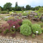 2016-07-05_70 Loki Schmidt Garten