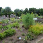 2016-07-05_86 Loki Schmidt Garten