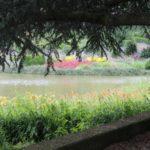 2016-07-05_91 Loki Schmidt Garten