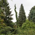 2016-07-05_92 Loki Schmidt Garten