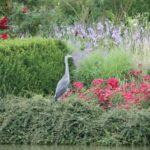 2016-07-05_99 Loki Schmidt Garten