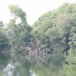 2016-07-27 Schaalsee 102