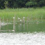 2016-07-27 Schaalsee 70