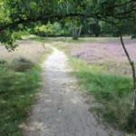 2016-08-17_36 Boberger Düne
