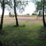 2016-08-17_49 Boberger Düne