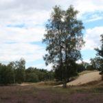 2016-08-17_67 Boberger Düne