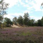 2016-08-17_68 Boberger Düne